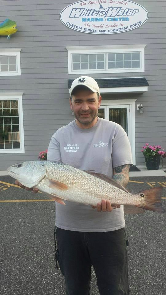 Red drum rolling north on the water for Long island surf fishing report