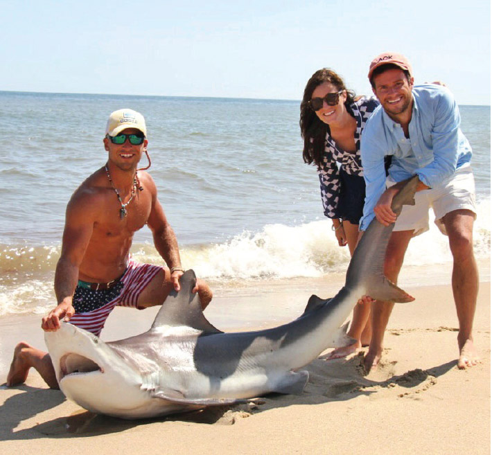 Even on the beach, a shark must be treated with respect.