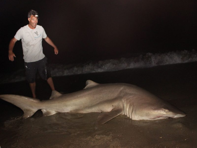 New jersey beach shark fishing report on the water for Nj shore fishing report