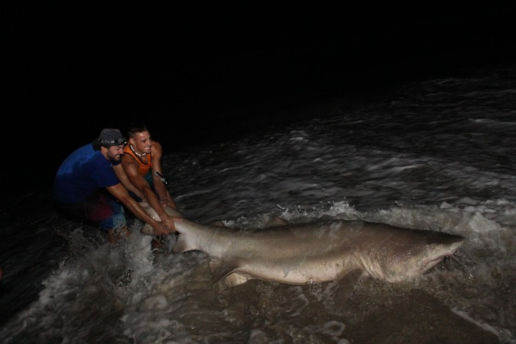 New jersey beach shark fishing report on the water for Shark fishing nj