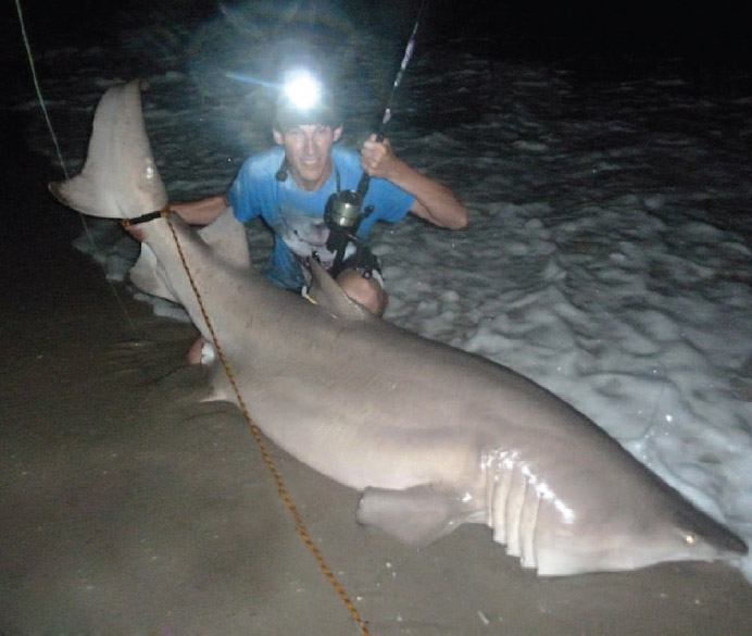 Shark nursery discovered on long island on the water for Surf fishing nj