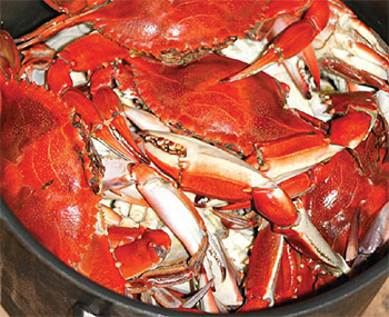 A pot full of fresh steamed blue crabs is a wonderful thing.