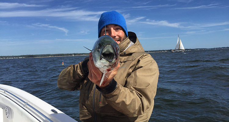 Reader report li sound albies on the water for Long island sound fishing report