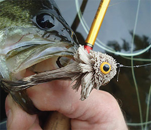 Bass bugs take advantage of the largemouth's predisposition for taking prey from the surface.