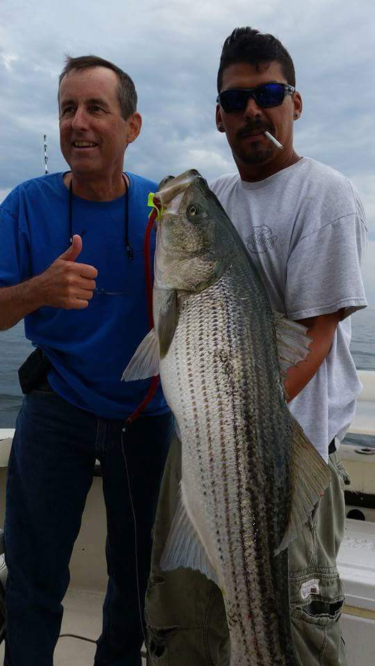 Great striped bass are being trolled up on The Otter.