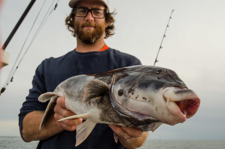 Newport, RI Blackfish