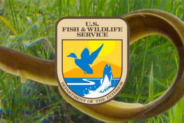 fwa-eel