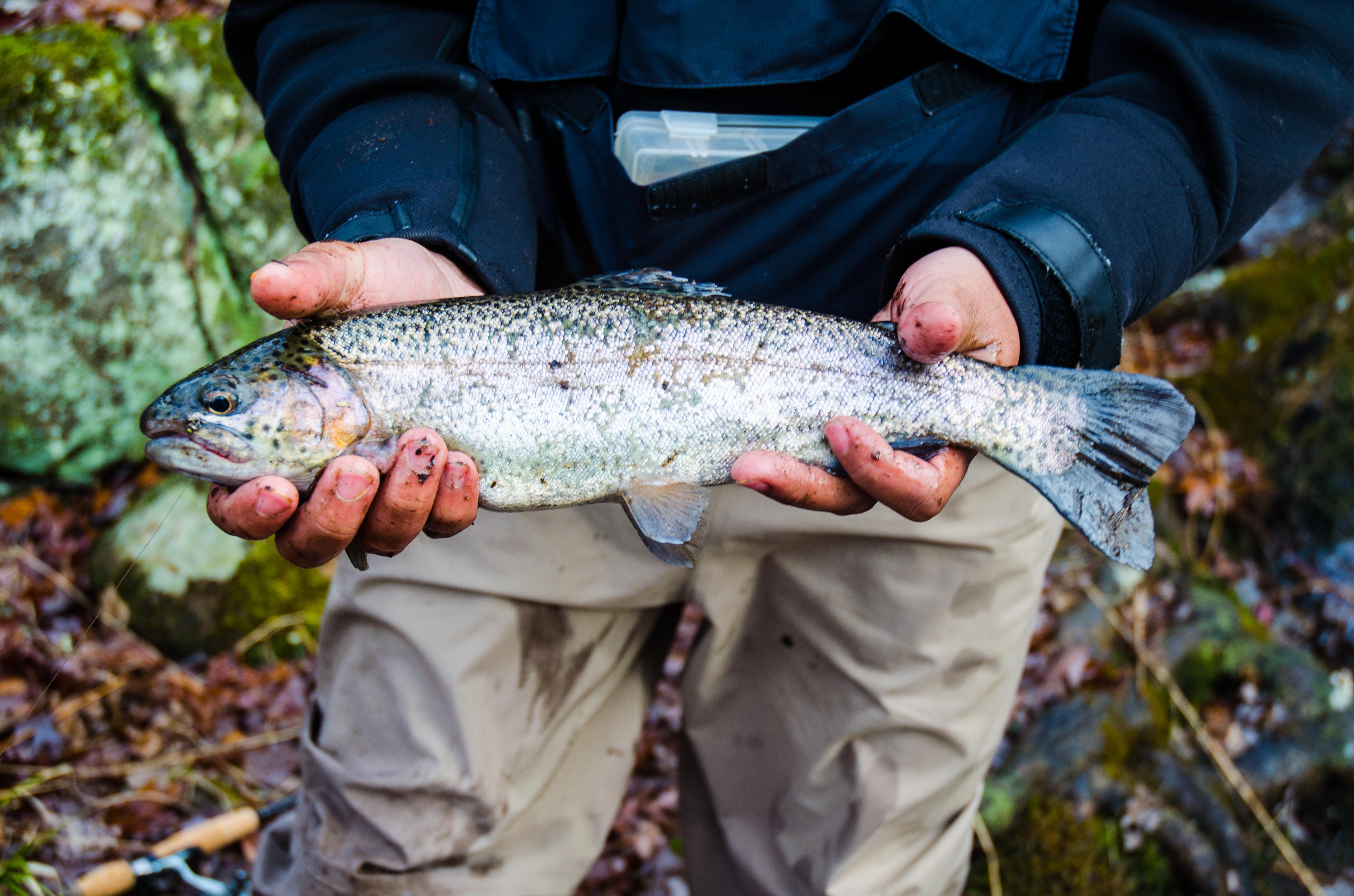 Pa trout stocking dates
