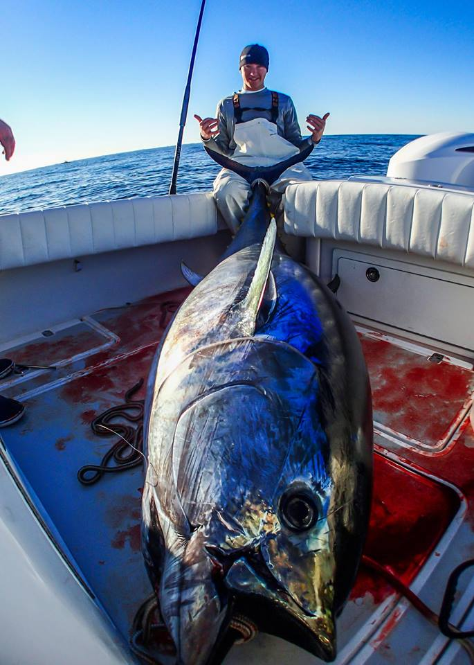 Giant Bluefin Tuna On Spinning Rod On The Water