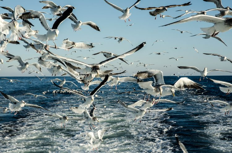 You know its been a good trip when this is the scene off the back of the boat. Seagulls fight for scraps as the mates clean the day's catch.