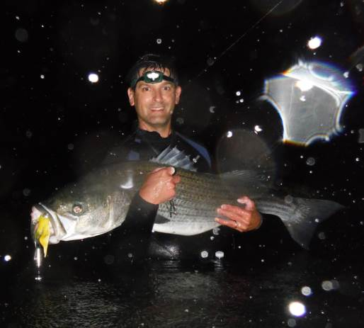 This large striper, like many before it, fell to a bucktail jig tipped with Uncle Josh Pork Rind.