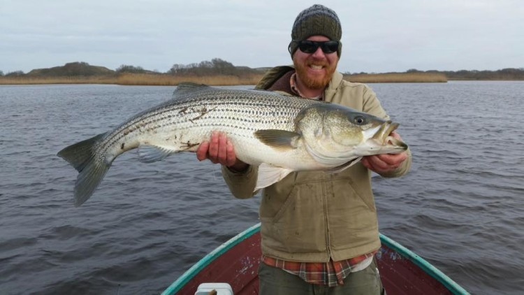 Cape cod fishing report january 21 2016 on the water for Cape cod fishing report