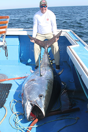 Maine bluefin