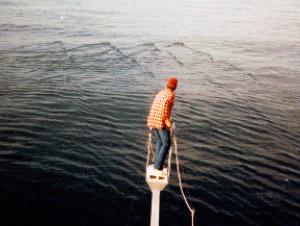harpooning-bluefin