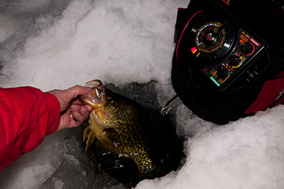 The glow body of the Custom Jigs & Spins Rat Finkee helped trick this big slab at night.