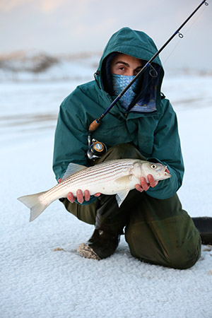 Small stripers feed in the surf all winter long.