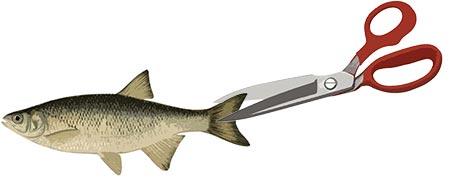 Cripple Your Baitfish