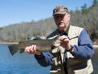 stocked brown trout