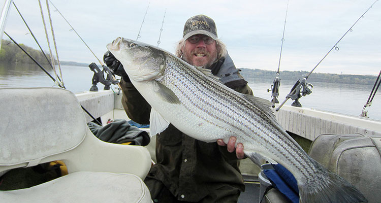 spring run stripers on the hudson river on the water