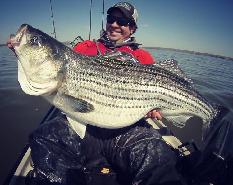 Light tackle trolling chesapeake striper on the water for Chesapeake bay striper fishing