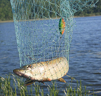 Within the Connecticut River system, pike forage heavily in March and April