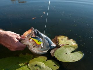 River Backwater Areas for Largemouth