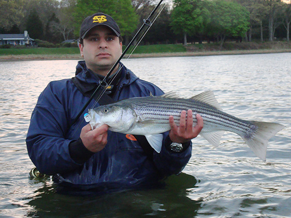 A good pair of chest waders are essential to allow a shore-based angler to reach holes and pockets around sand bars where spring stripers prowl.