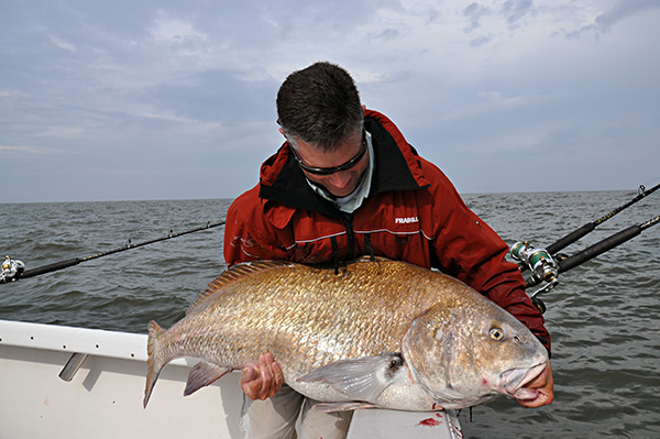 Black drum use sloughs, like Tussey's, as routes into the bay, staying in the deeper water on their way to the areas where they spawn.