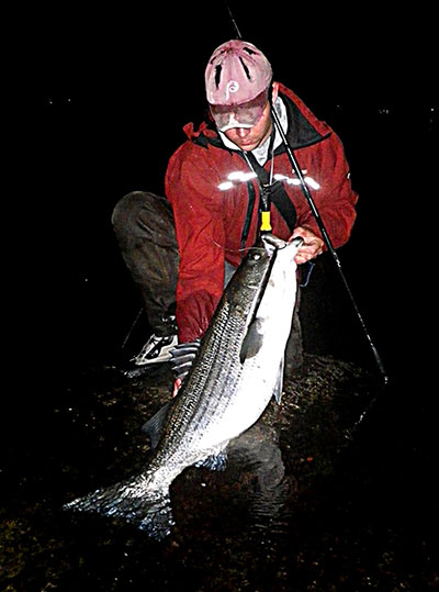 Dead or alive, eels are a fantastic striper bait for surfcasters, especially at night.