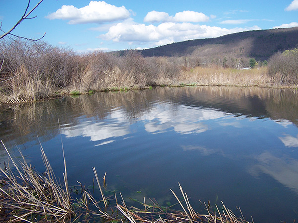 Spring panfish habitat can usually be found in shallow coves in lakes and ponds, and in backwaters or setbacks in larger rivers.