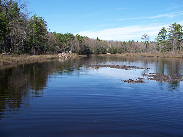 Spring floods can open up shallow backwater areas
