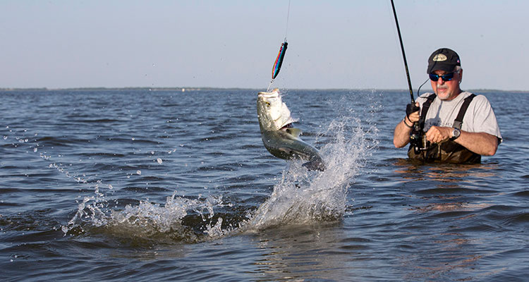 Big fights from springtime back bay bluefish on the water for Blue fish rig