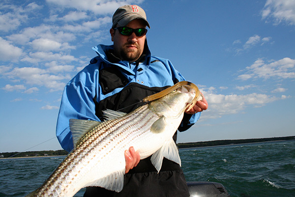 Andy Nebreski with a healthy Middle Ground Striped Bass