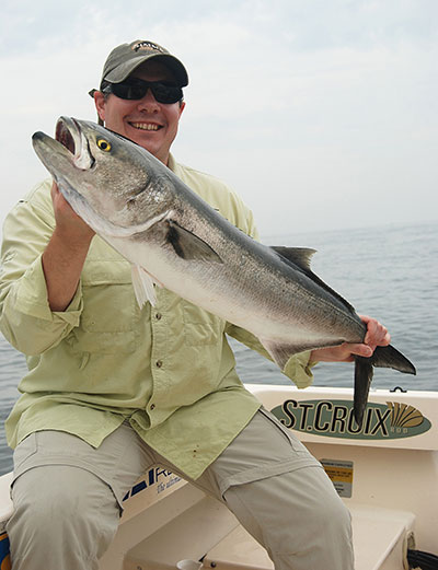 """Spring bluefish are nicknamed """"racers"""" for their long, skinny bodies."""
