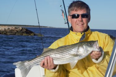 Ross Campbell caught this schoolie striper, and many more, off the South Side of the Cape Wednesday afternoon.
