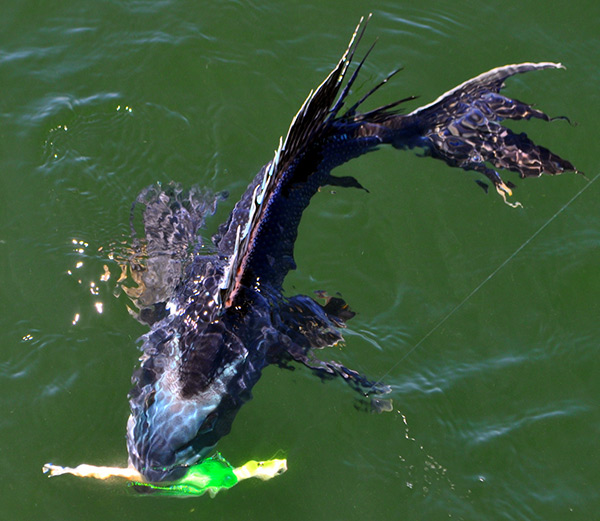 A bucktail jig and Gulp trailer is a top bait for spring sea bass.