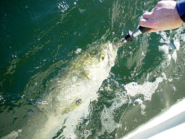 A lip gripper, like the Boga Grip, makes it easy to land and unhook the toothy blues.