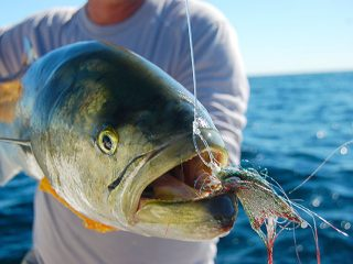 Back-bay bluefish are perfect targets for fly-fishing.
