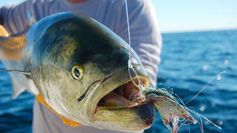 Rhode Island Fishing Reports