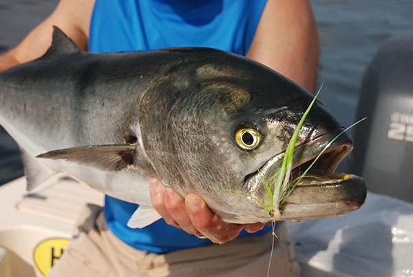 When fishing for blues with a fly rod, use a heavy monofilament or tie-able wire tippet.