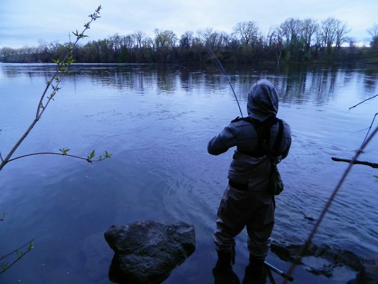 Discovering the connecticut river shad run on the water for Connecticut river fishing