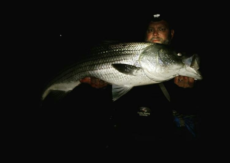 Henry White has been catching quality bass while fishing plugs on the late-night tides.