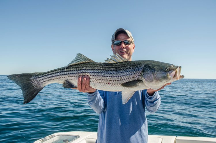 cape cod fishing report - june 23, 2016 - on the water, Fishing Bait