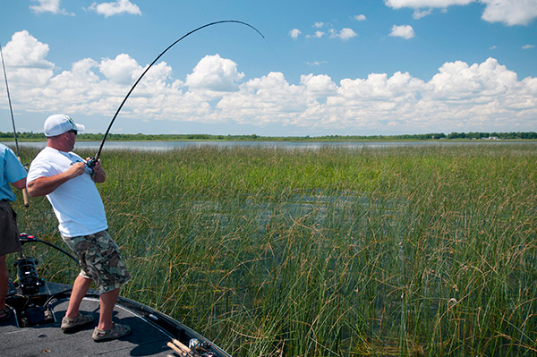 Jigs allow anglers to haul big bass from heavy cover