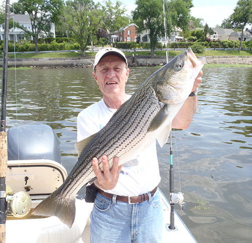 The author holds up a shallow-water striper that fell to a live bunker.