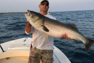 Big stripers are being caught in good numbers off the East End of Long Island.