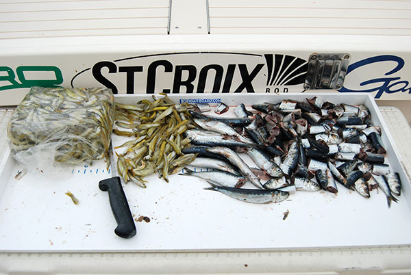 Whole spearing and chunked sardines