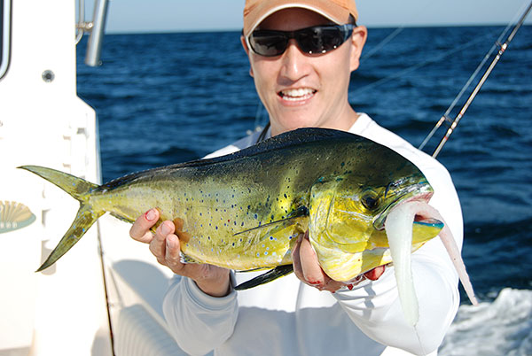 Soft-plastic stickbaits are very effective mahi lures.