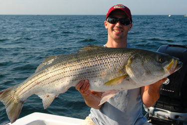 Most of the striped bass schooled up in the area will be in the 26- to 36-inch range, but there are certainly some trophy-sized fish mixed in as well.