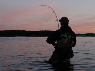 Five Plugs To Fake Out Summertime Stripers